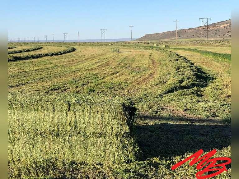 Dog Mountain Hay Ranch - 3,200± Acres