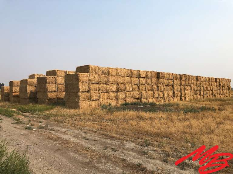 Montana Hay Auction  1st & 2nd Cuttings • Lrg & Small Squares