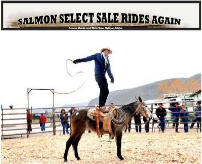 22nd Annual Salmon Select MULE Sale 2021