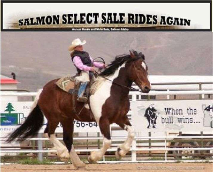 48th Annual Salmon Select Horse Sale 2021