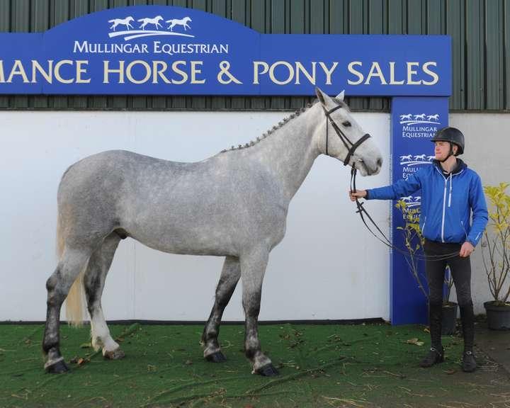 Performance Horse & Pony Sale & CONNEMARA PONY SALE, Saturday 7 November