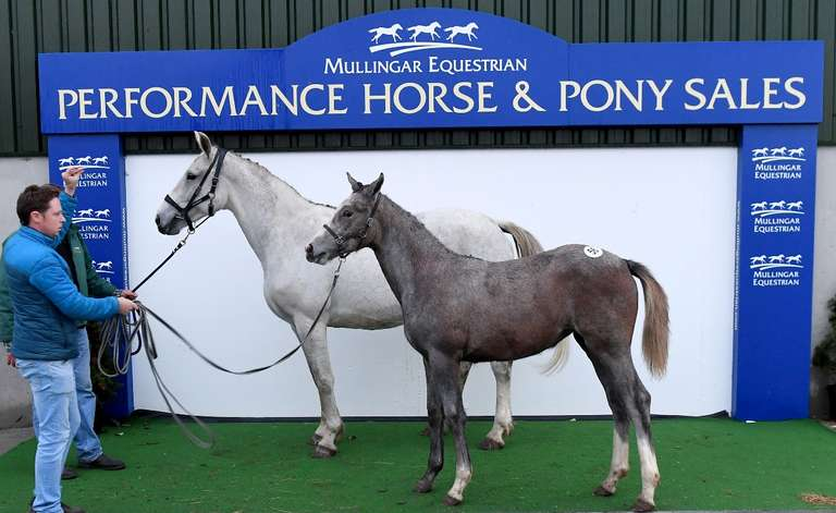 Mayo Roscommon Breeders Group Select Show Jumping & Eventing Foal Sale