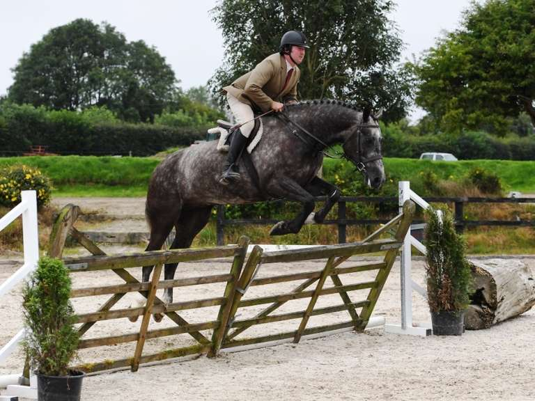 Select Show & Sale of Irish Born Hunting & Eventing Horses & Ponies FRIDAY 4 SEP 2.00 PM