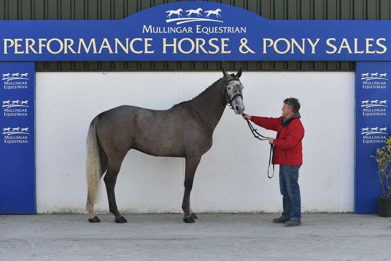 Performance Horse & Pony Sale SATURDAY 27 MARCH 2021