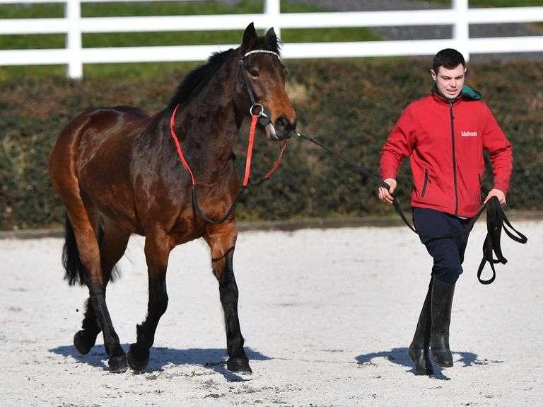 PERFORMANCE HORSE & PONY SALE FOR 3YO+ SATURDAY 4 SEPTEMBER
