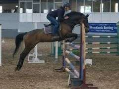 Z TIME 2012 16 hh Mare