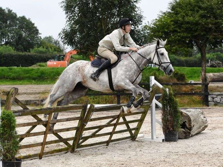 Select Show & Sale of Irish Born Hunting & Eventing Horses & Ponies FRIDAY 3 SEPTEMBER