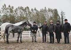 COOLVIN BRUNO 2021 Foal Grey Colt (IHR)