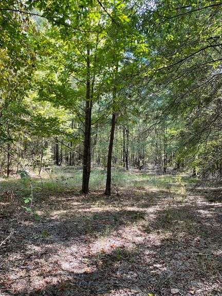 East Texas timber land for sale