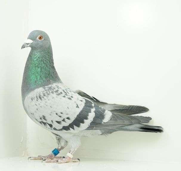 Elmore County Idaho 4-H Fundraiser Donated Birds Now Listed