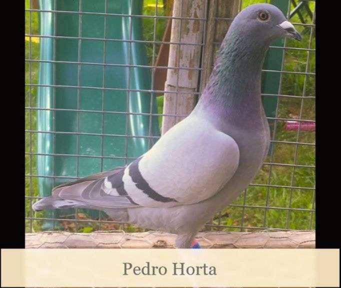 Pedro Horta