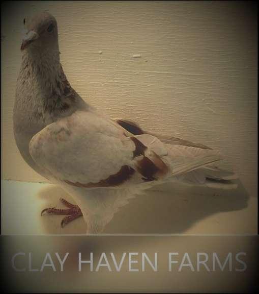 CLAY HAVEN FARMS