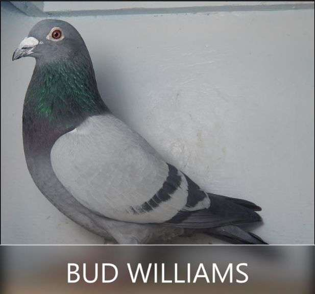 BUD WILLIAMS