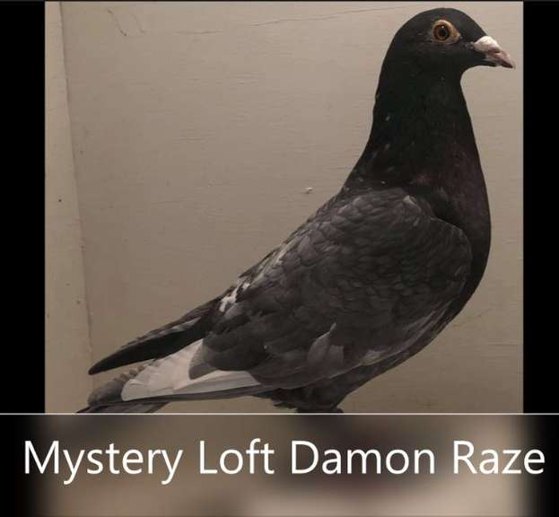 Mystery Loft Damon Raze
