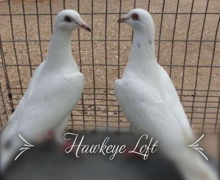 Hawkeye Loft