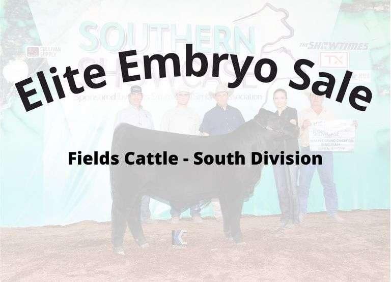 Elite Simbrah Embryo Sale