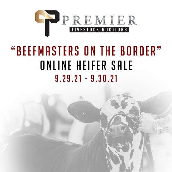 """Beefmasters on the Border"" Online Sale"