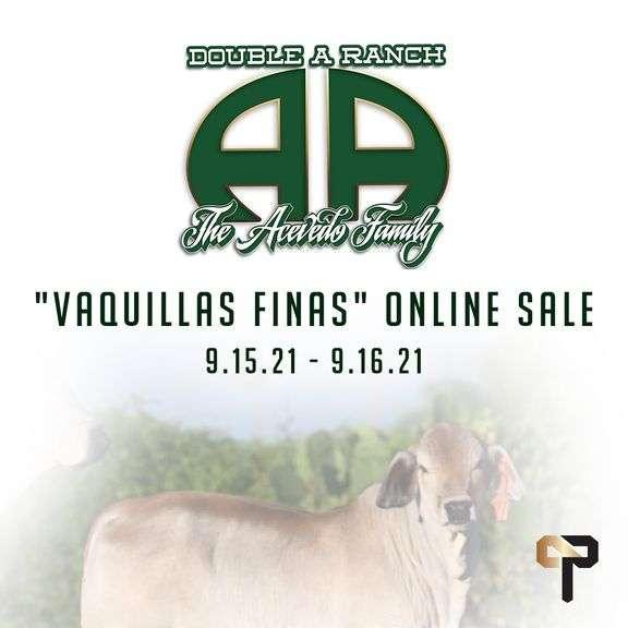 "Double A Ranch's ""Vaquillas Finas"" Online Sale"