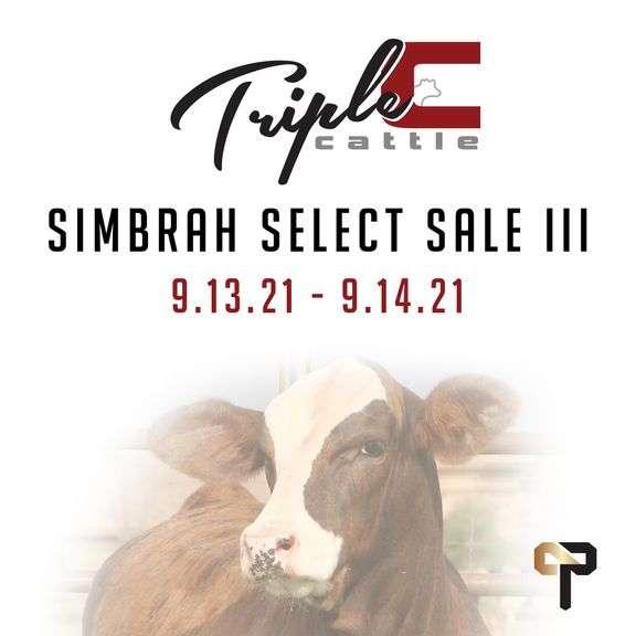 "Triple C Cattle's ""Simbrah Select"" Sale III"
