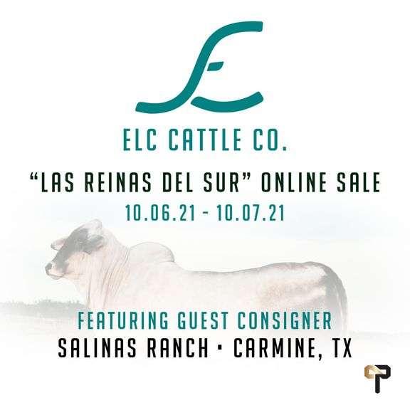 """ELC Cattle Co. """" Las Reinas del Sur"""" Sale"""