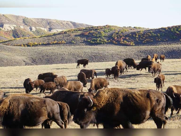 Middle Creek Ranch Production Webcast Auction