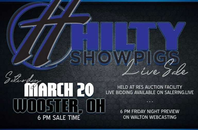 Hilty Showpigs Live Sale