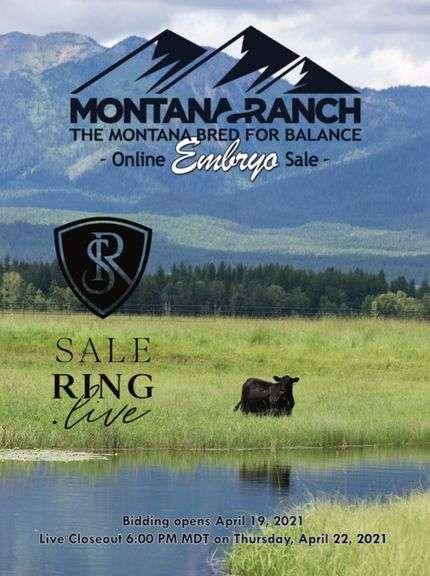 Montana Ranch Embryo Auction