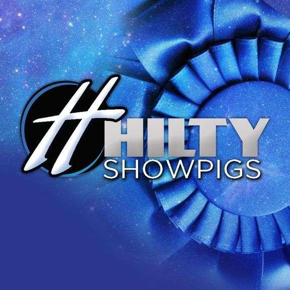 Hilty Showpigs Live Auction