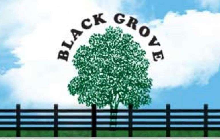 Black Grove Maternal Influence Sale