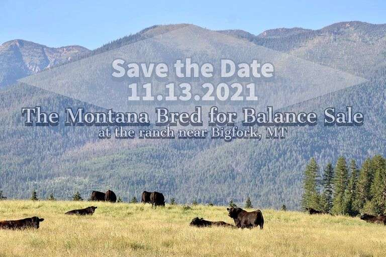 Montana Ranch Bred for Balance Sale