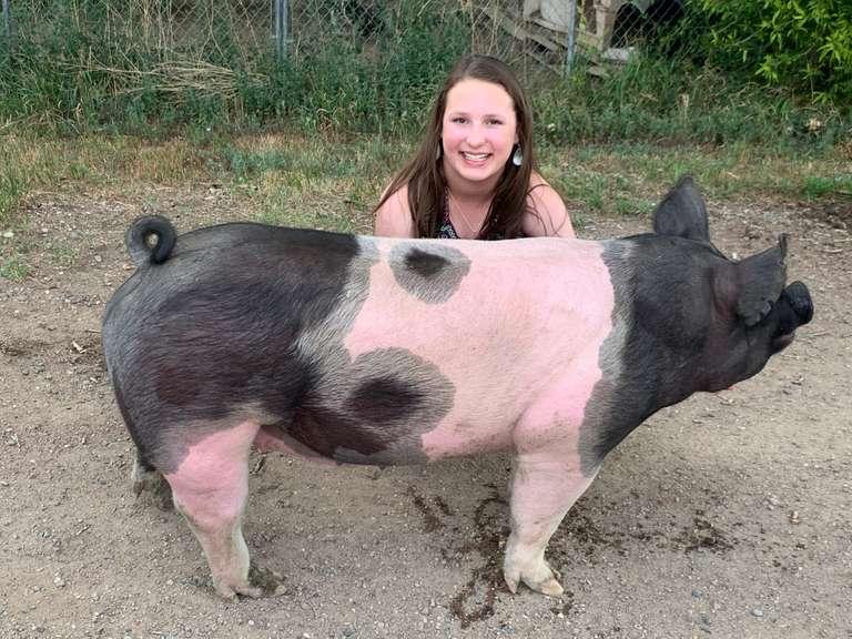 4-H Scholarship Hog