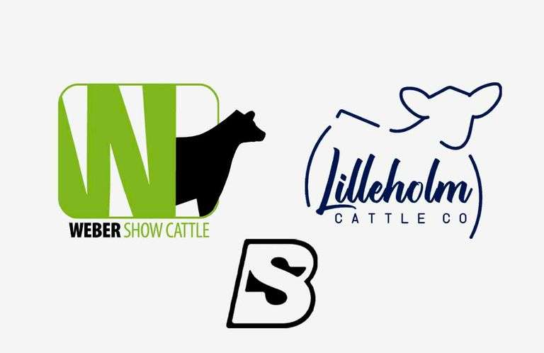 10/10/21 LILLEHOLM CATTLE CO / WEBER SHOW CATTLE