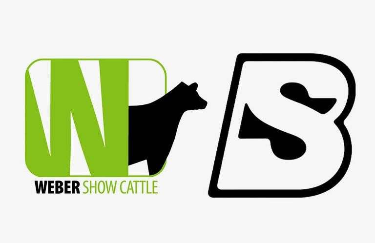 9/19/21 WEBER SHOW CATTLE