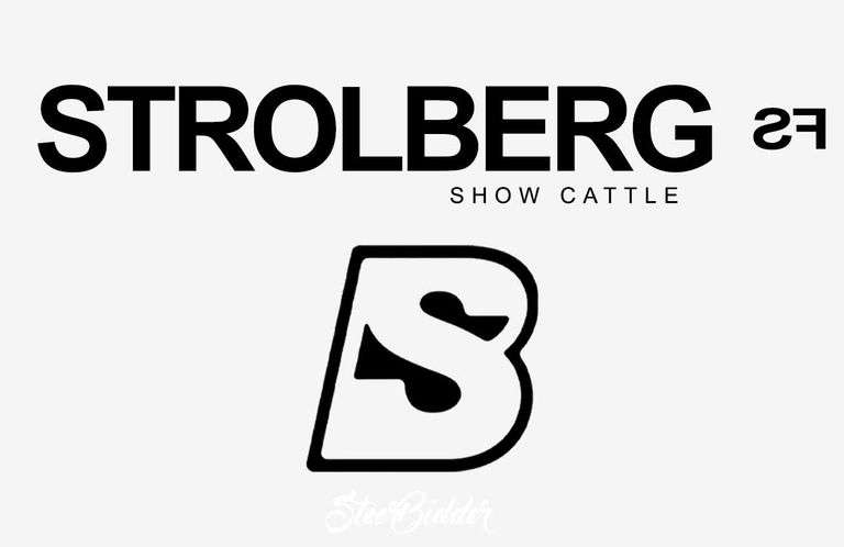 9/19/21 STROLBERG FARMS SHOW CATTLE