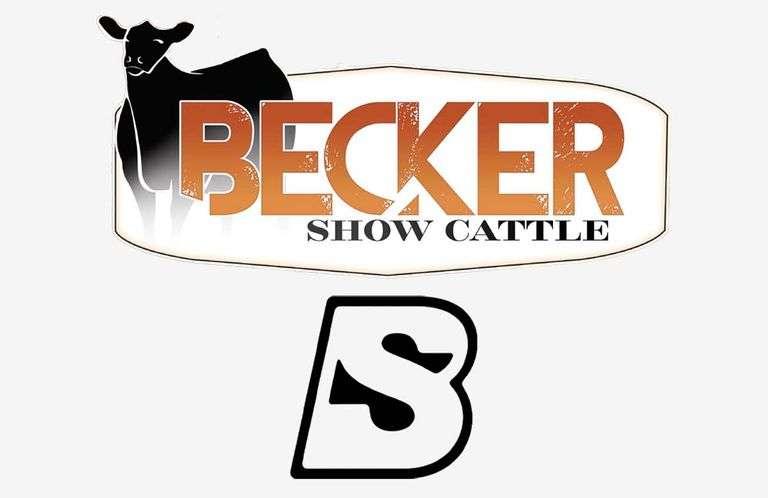 9/19/21 BECKER SHOW CATTLE