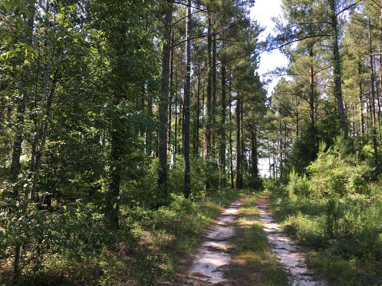 382+/- acres, Ogeechee Pines, Midville, GA