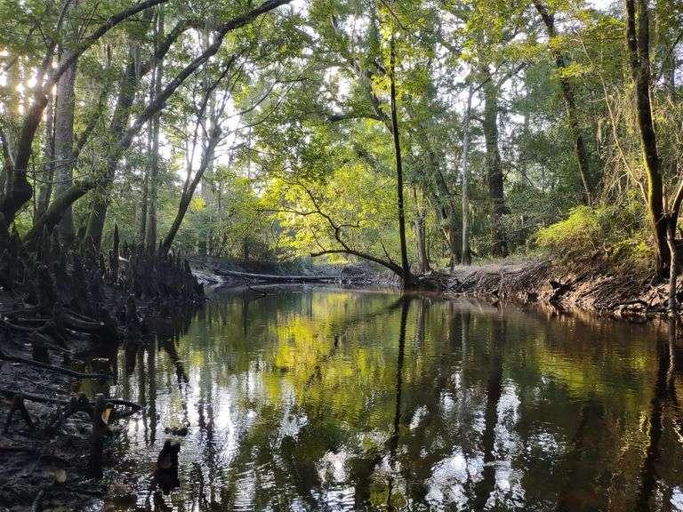 Arrowhead Creek 251 acres, Wheeler County, GA