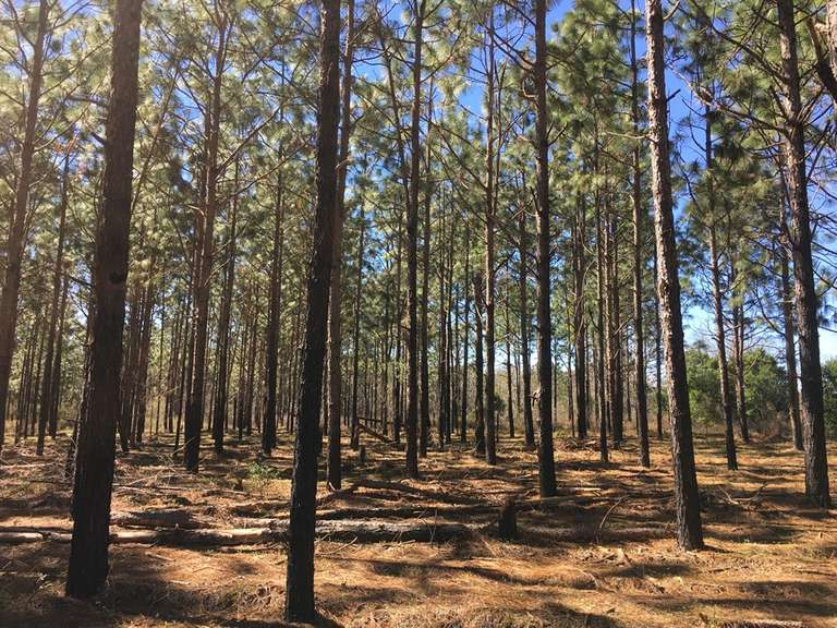 The Camilla Tract, 47 acres, Mitchell County, GA