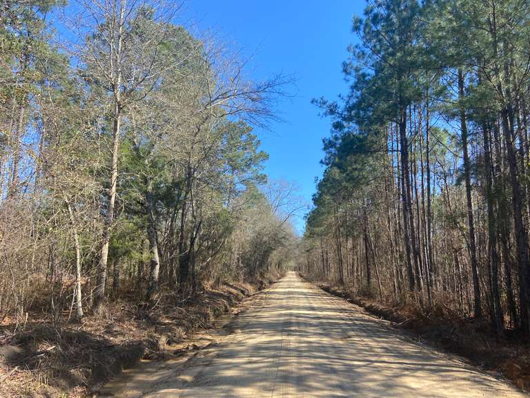 The Adabelle Tract, 39 acres, Bulloch County, GA
