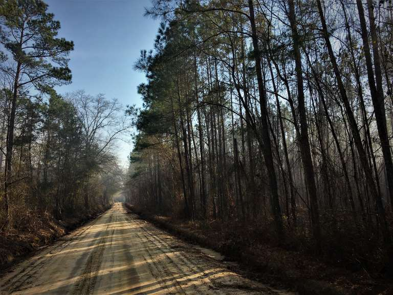 Bulloch County, GA Land Auction