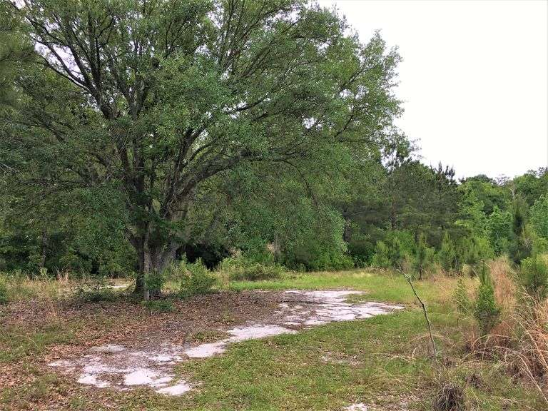 Cook County Georgia Land Auction
