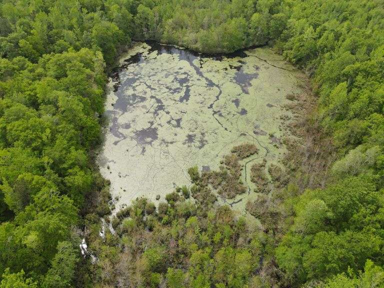 64 Acres in Thomson, GA