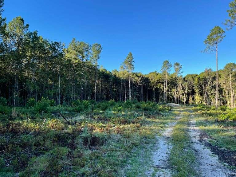 21 acres, Bulloch County, Register,  GA