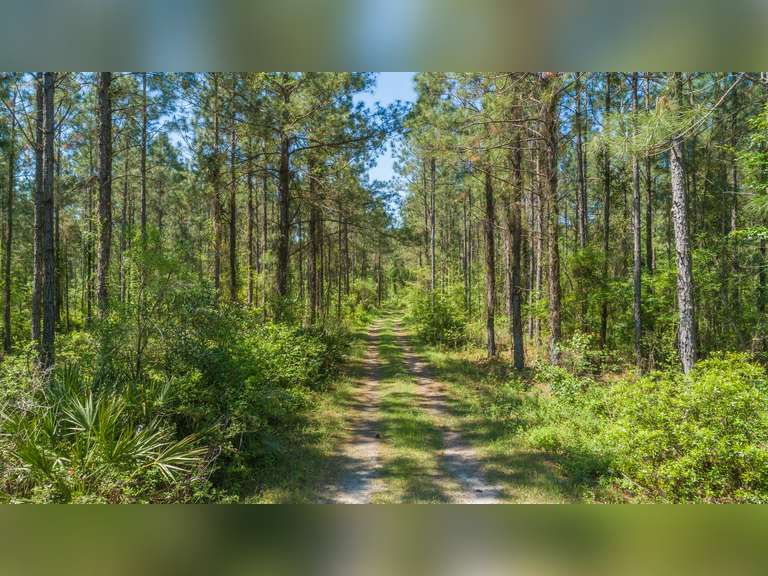 241 +/- Acre Timber and Recreational Property - Colquitt County, Georgia